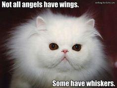 Ahhhhh.  So cute :)