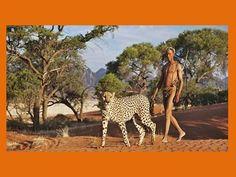 Africa: Bushmen/San man with his cheetah, Namibia