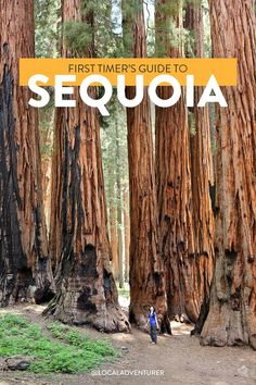 Check out our list of 15 Amazing Things to Do in Sequoia National Park and Kings Canyon National Park. They are home to the 3 largest trees in the world. Arcadia National Park, National Parks Map, Rainier National Park, National Park Posters, California National Parks, Smoky Mountain National Park, California Travel, Sequoia California, Canyonlands National Park