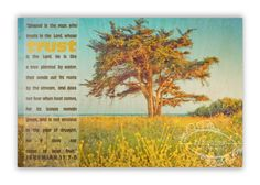 """Christian Wall & Desk Art Vintage Photography Cypress Tree """"Trust"""" Ocean Scripture, Turquoise, Yellow, Wildflowers by anytimeart Photography Gifts, Vintage Photography, Christian Art Gifts, Yellow Wildflowers, Wall Desk, Cypress Trees, Do Not Fear, Trees To Plant, Wild Flowers"""