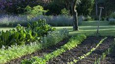 Potager deco legumes ornement