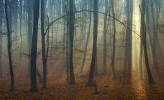 Forest Magic by Cristi Jora on 500px
