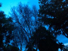 Purple and Blue Aesthetic: Photo Aesthetic Images, Blue Aesthetic, City Aesthetic, Aesthetic Photo, Pale Tumblr, Im Blue, Dark Blue, Light Blue, Everything Is Blue