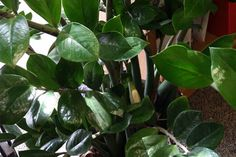 Houseplants   - Articles & Resources from Nebraska Extension in Lancaster County