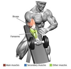 BICEPS - STANDING ONE ARM DUMBBELL CURL OVER INCLINE BENCH