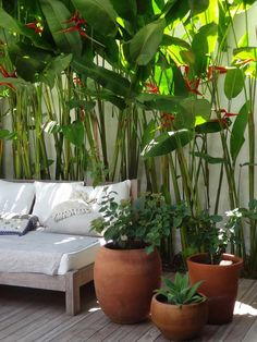 Best tropical patio design ideas to copy right now 05 Tropical Garden Design, Tropical Backyard, Tropical Landscaping, Tropical Plants, Backyard Landscaping, Tropical Gardens, Leafy Plants, Landscaping Ideas, Potted Plants