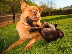 Tipps: Die richtige Hundepension finden – Foto: Shutterstock / Michael Pettigrew    www.einfachtierisch.de