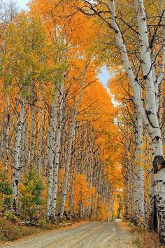 Aspen Alley By Ron Latimer  There is a place like this on Cedar mountain...beautiful