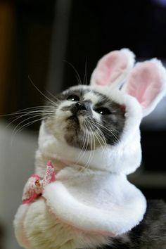 When's Halloween. I'm a bunny
