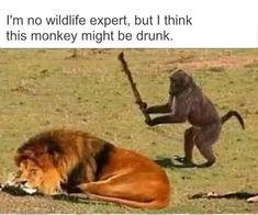 42 Funny Memes And Hilarious Sayings - fun/Sprüche - Humor bilder Funny Animal Jokes, Stupid Funny Memes, Cute Funny Animals, Funny Relatable Memes, Hilarious Sayings, Mom Funny, Funny Stuff, Funny Humor, Animal Humor
