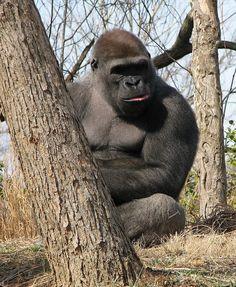 Louisville Zoo, Louisville | Louisville Zoo