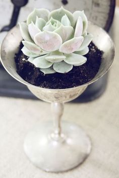 silver and succulents (so pretty!)