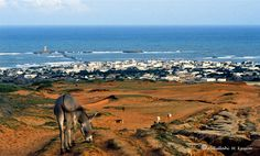 This is the city that we came from and which we consider as our hometown. It is located on the East African Coast on the western shores of the Indian Ocean.