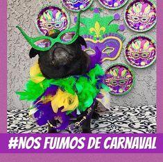 Es domingo de nuestro esperado encuentro con motivo del primer grito de carnaval 🐶🐶🐶🎉🎉🎉🎉🎉 así que a disfrutar este #domingo #familiar en compañía de nuestros consentidos #felizdia #puglovers #pugmeetup #mipugyyo #amorcanino #modacanina #pugcaracas #caracas #noticias #alegredespertar