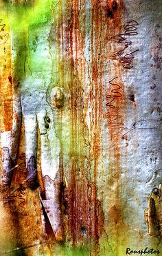 Bark: Nature's Pallet by ronsphotos | Paperbark gum tree, with bark pealing off, and squiggley lines made by insects under the bark. Green is from leaves I shot thru to add to the effect.