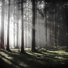 Eerie Nature Photography by Jürgen Heckel