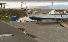 This dog isn't happy with Google Street View car http://cdn-image.travelandleisure.com/sites/default/files/1523375254/dog-chasing-car-DOGGLE0418.gif