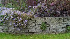 Voorbeeld van verhoogd border met gesneden betontegels.  http://www.vicas.nl/tuinontwerpen/wp-content/gallery/van-recht-naar-rond-beeks-houben/tuinontwerp-verhoogde-border-gestapelde-stoeptegels-stapelmuur.JPG