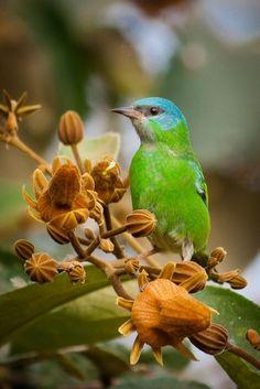 Foto NÃO-IDENTIFICADA por Andrey Miranda | Wiki Aves - A Enciclopédia das Aves do Brasil