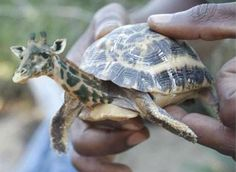 That is a giraffe-turtle