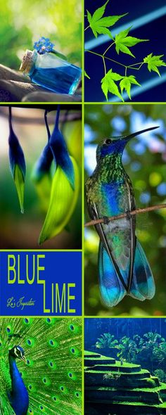 Next theme: BLUE & LIME (Lu can't post tonight, but she made a beautiful collage for us!)