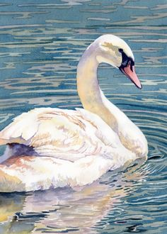 """Majestic Swan watercolor by Lorraine Watry available for purchase. Framed 18"""" x 14"""""""