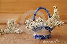 Medicinal plants - milfoil, yarrow flower (Achilea millefolium)
