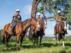 Horseback Winery Tours