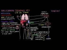 What is polycythemia vera? - YouTube