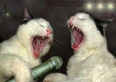 Just a couple of cats singing Karaoke Christmas Carols...