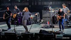 Temple Of The Dog, Concert, Dogs, Pet Dogs, Concerts, Doggies