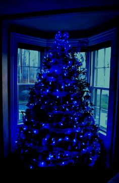 Snow covered tree with blue lights...reminds me of my childhood in ...