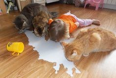 They Will Soon Start To Think That They're Pets Too #friendsip #cats #children #girl #photo