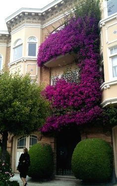i dont know what kind of vine/bush/tree/plant-thing that purple prettyness is but i want to steal it and plant it's seeds everywhere i go. GORGEOUS