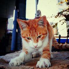 "@shoji_ogawa_unlimited's photo: ""#釜ヶ崎 #kamagasaki #cat"""