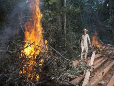 Help us Stop the Illegal Deforestation of Prey Lang Forest in Cambodia     Please join and sign, then spread the word!
