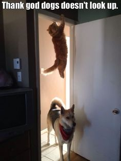 Funny cats attack on Caturday!!–12 Pics--Thank god dog doesn't look up.