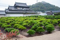 Growing grounds Kinashi Bonsai District