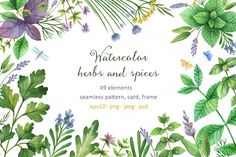 Watercolor herbs and spices by Elena Medvedeva on @creativemarket
