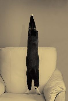 yoga cat, stretching those muscles :)