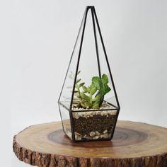 Terrário Mini-Prisma – Terrário geométrico de vidro e metal produzido artesanalmente   Kit DIY (plante-você-mesmo!). São ideais para quem quer se aventurar na jardinagem caseira e ter a experiência de montar seu próprio mini-jardim. Também é uma ótima …