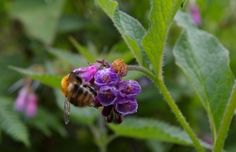Herb planting for bees.......helps bee and other pollinators, and fills your garden with scent, colour and flavour.....