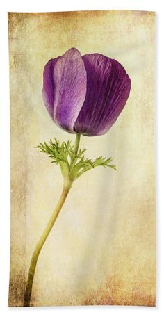 """#Anemone #BeachTowel featuring the photograph """"Sophisticated Lady"""" by Caitlyn Grasso. #purple #flower"""
