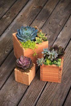 Wood Succulent Planter 30