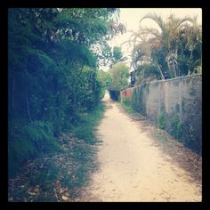 It's like the secret garden, but it's the secret pathway to the beach. Perfect imagery for P.T.