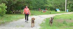 Voici tous les groupes de sport de traction canin retrouvé présentement au Québec