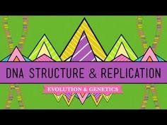 63 best genetics structure of dna replication images on dna structure and replication crash course biology 10 youtube fandeluxe Images
