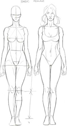 Female Anatomy Study of drawing lesson and tutorials with video (8)