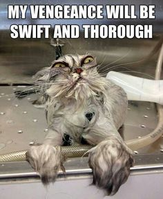 Humor, OMG this is hilarious! I love the cats face!