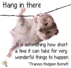 An poster sized print, approx (other products available) - Little dwarf hamster hanging on for dear life. - Image supplied by Fine Art Storehouse - poster sized print mm) made in Australia Hamsters As Pets, Cute Hamsters, Rodents, Baby Animals, Funny Animals, Cute Animals, Roborovski Hamster, Gerbil, Kawaii